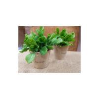 Mini plante garden -pot kraft