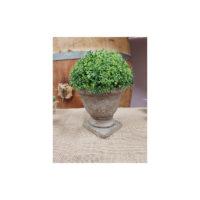 Location mini plante medicis