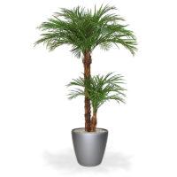 Location palmier 2m20