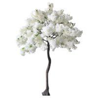 Arbre cerisier blanc H2m70